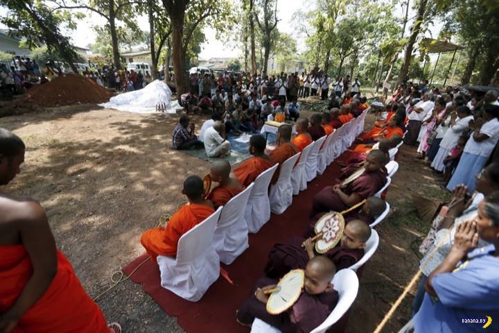 Похороны слона