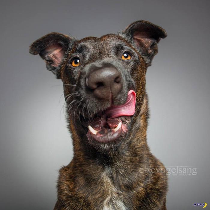 Чудесные и эмоциональные портреты собак