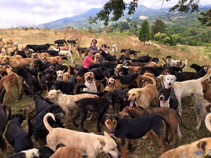Приют для собак в Коста-Рике