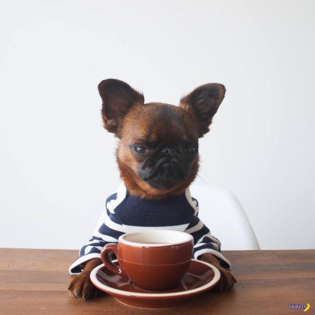 Gizmo –самый недовольный пёс в мире