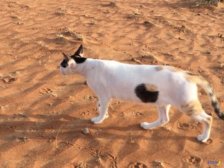 Обнаружен дырявый кот