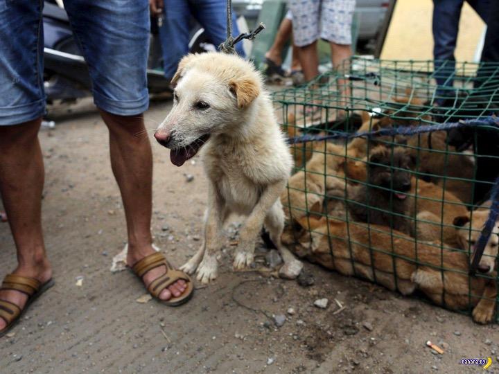 Бесконечная грустная тема про собак