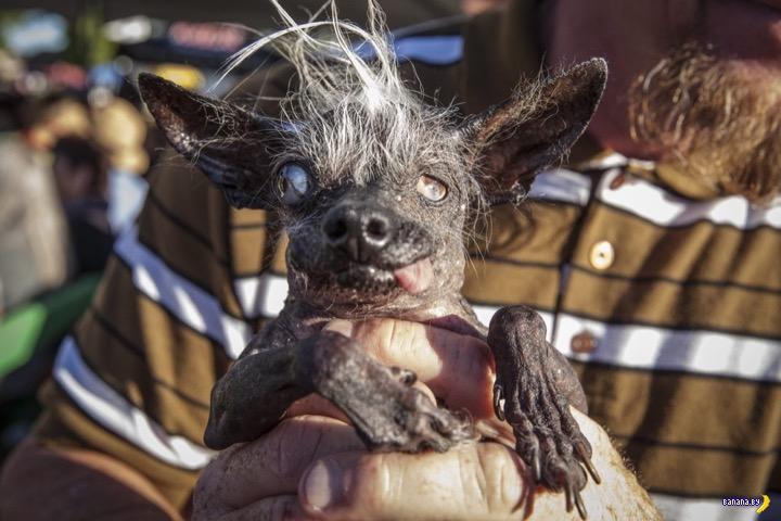 Самая страшная в мире собака - 2016