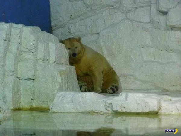 Умер самый грустный белый медведь в мире