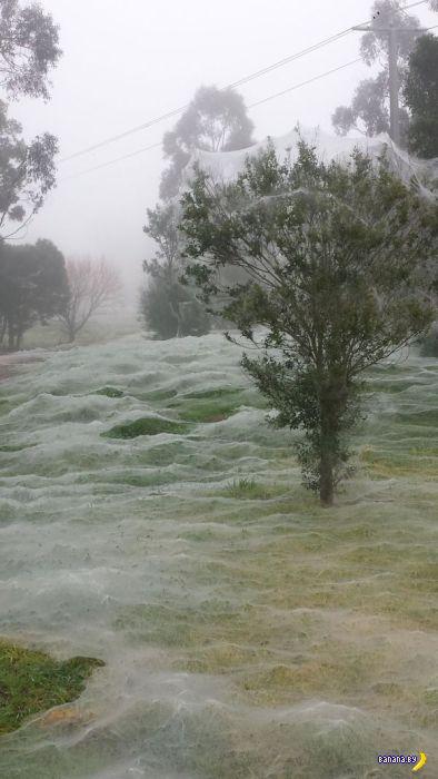 В Австралии не снег