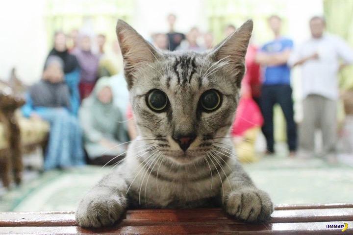 Принципиальная разница между котами и собаками