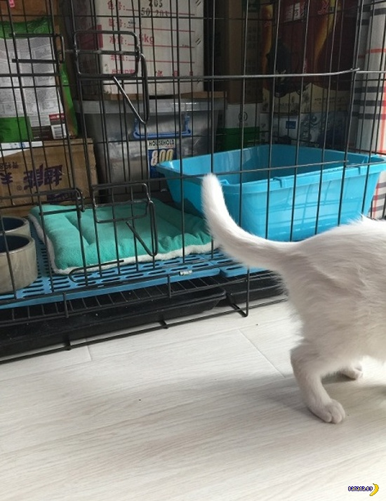 Кот, который умеет выбираться из клетки!