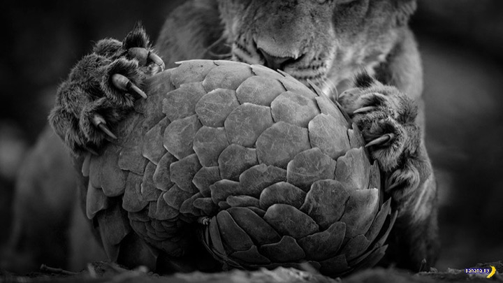 Финалисты конкурса The Wildlife Photographer Of The Year 2016