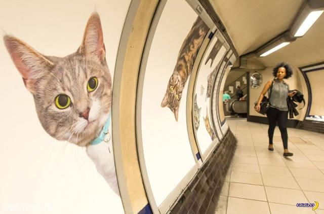 Коты против рекламы в метро