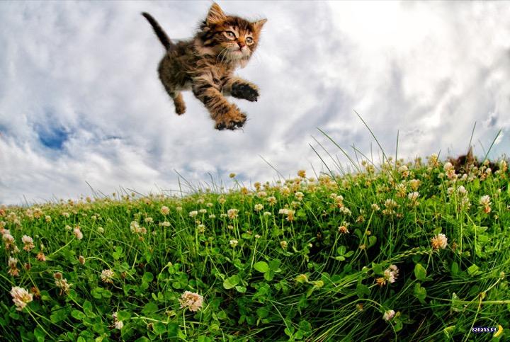 Летающие котята!