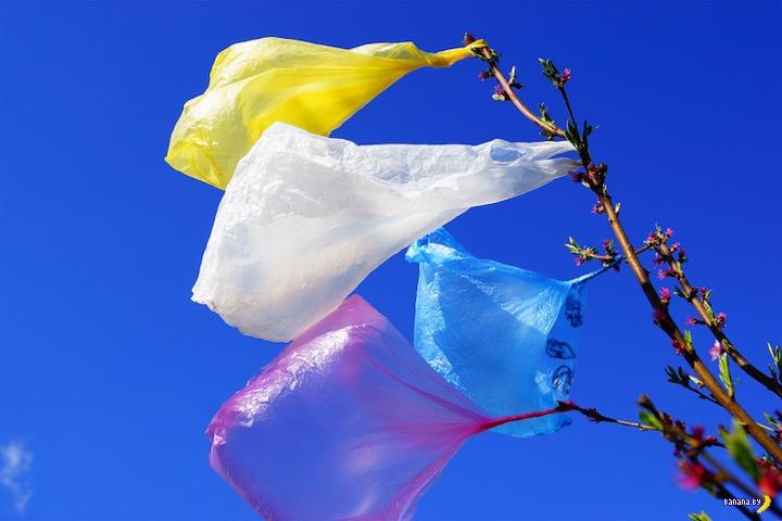 Калифорния стала первым штатом с полным запретом пластиковых пакетов