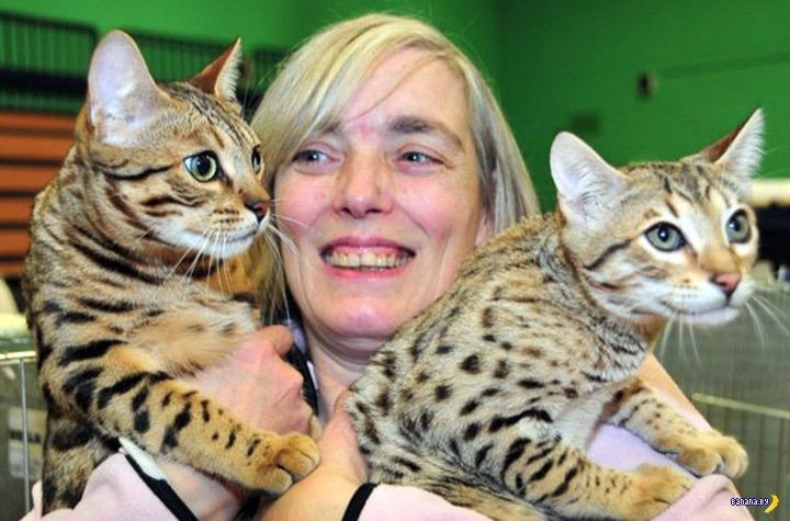 70 её кошек