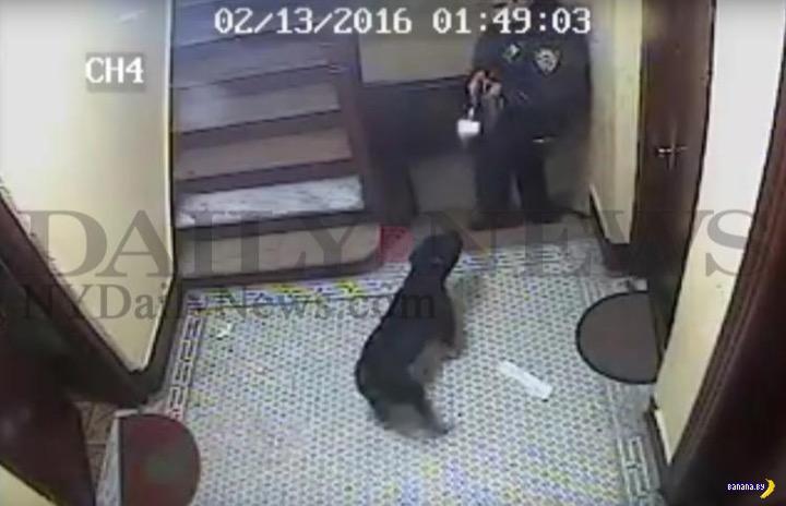 Копы могут официально стрелять в собак