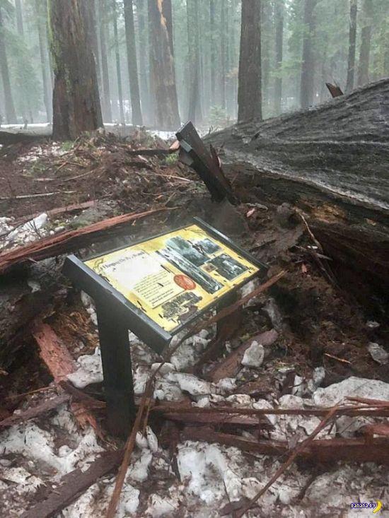 Угробили дерево, спихнули вину на ураган