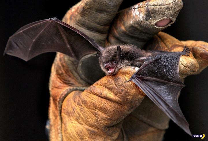 Летучие мыши сами себя спасли