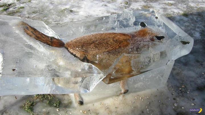 Лисичка и рыбак