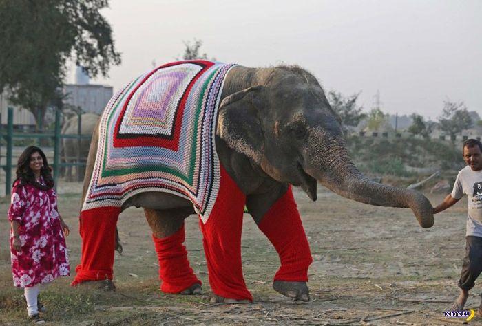 Слоны в свитерах и гольфах
