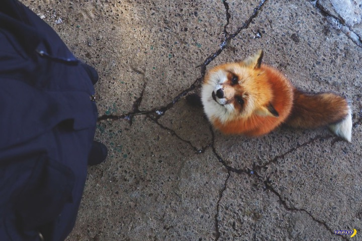 Деревня лис в Японии