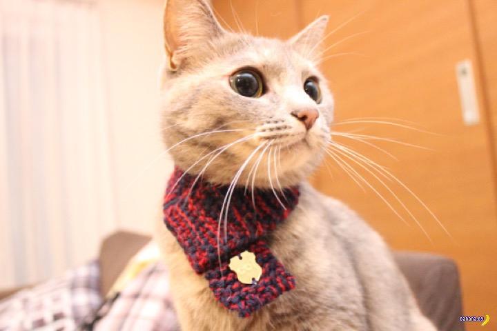 Новый японский тренд для кошек