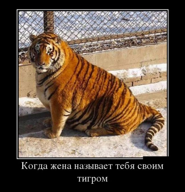 1486718802_demotivatory_03.jpg