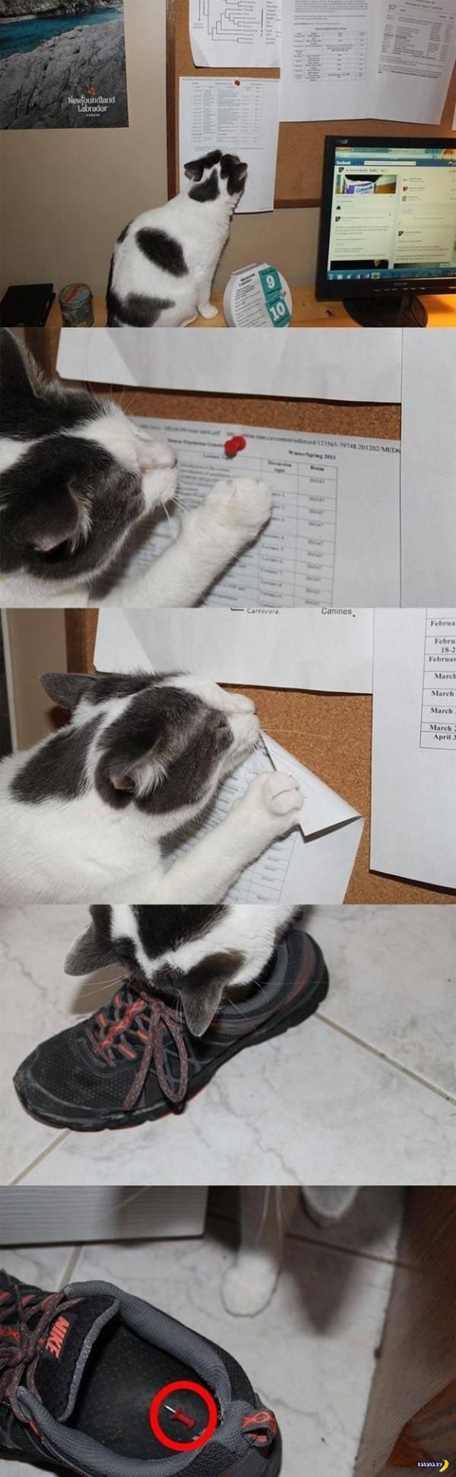 Коты –вредители!