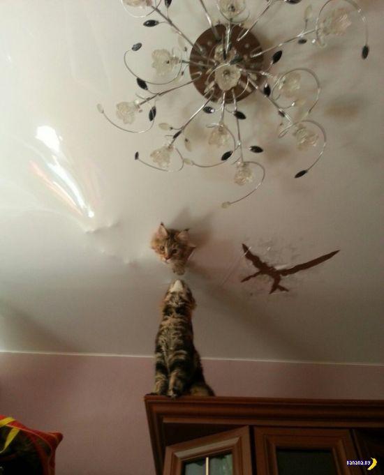 Коты против натяжного потолка