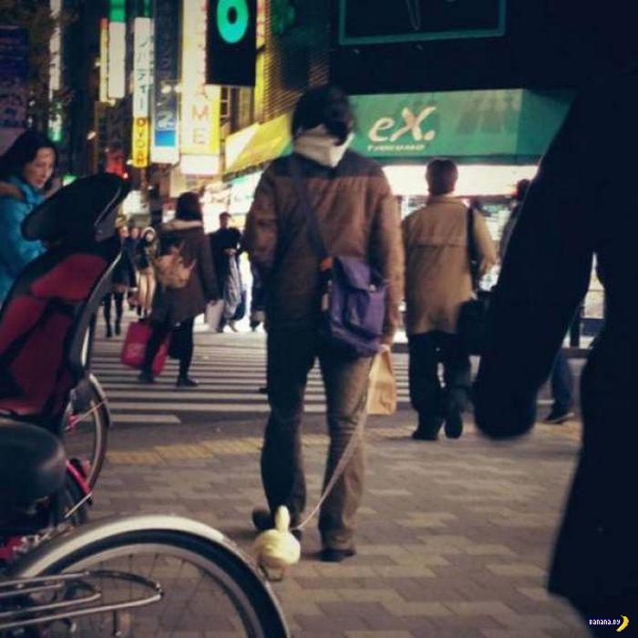 А тем временем в Японии - 4