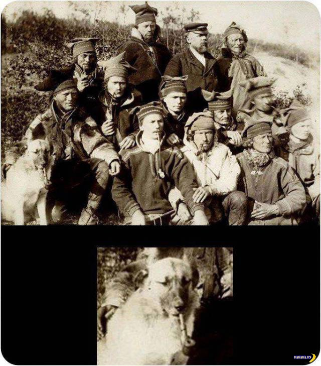 Прикольные картинки - 1780