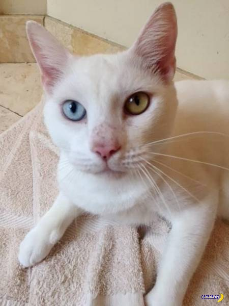 Слепой кот по кличке Коттон