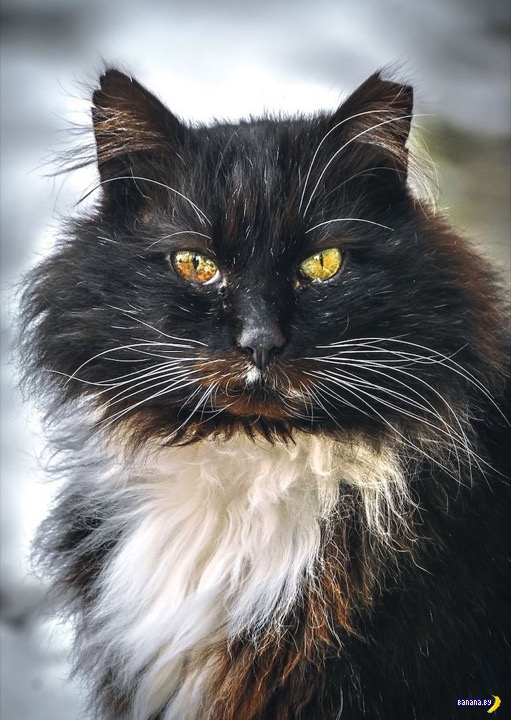 Художественные портреты бездомных котов