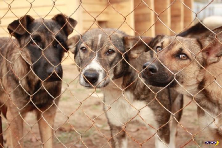 Жесть с собаками в приюте в Перми