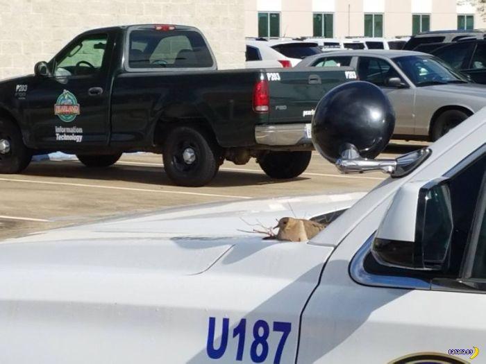 Почему копы бросили машину на стоянке?