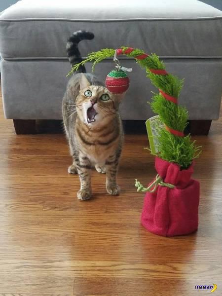 Коты – лучшие актёры