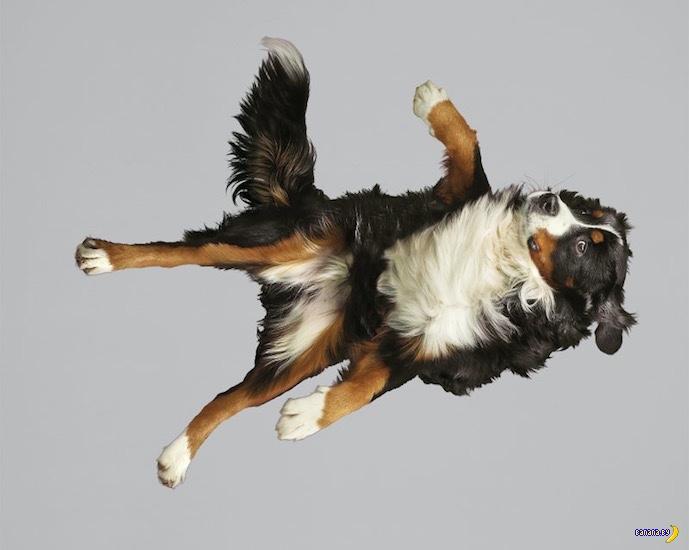 Падение собаки и три нелепых смерти