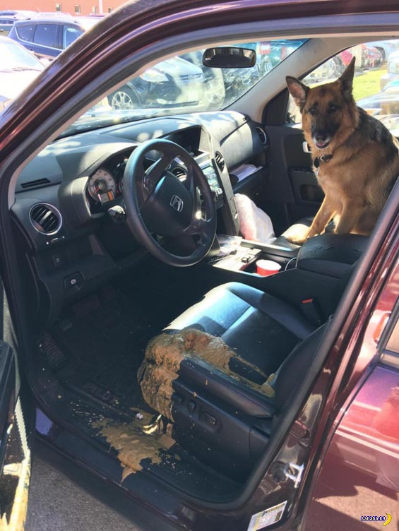 Рекс, а ты подождешь в машине!