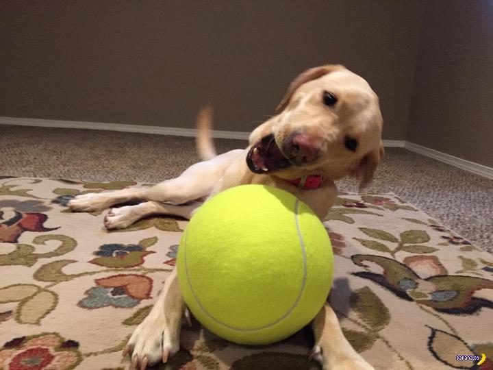 Лучший подарок для собаки