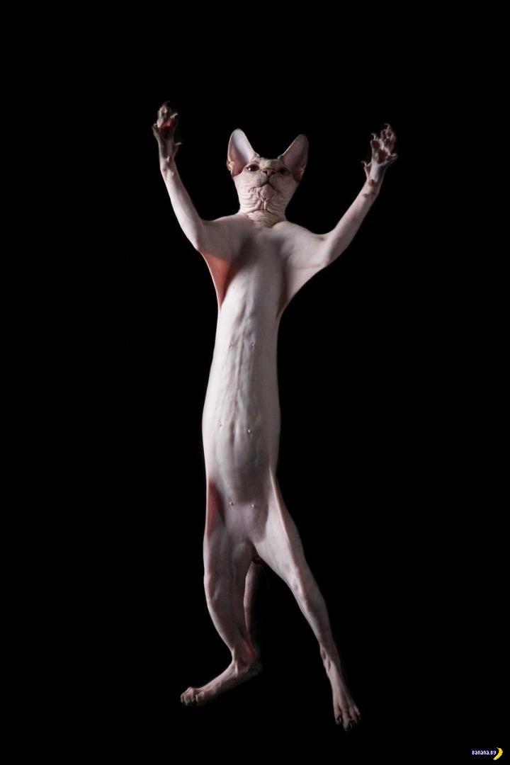 Лысые коты – инопланетяне!