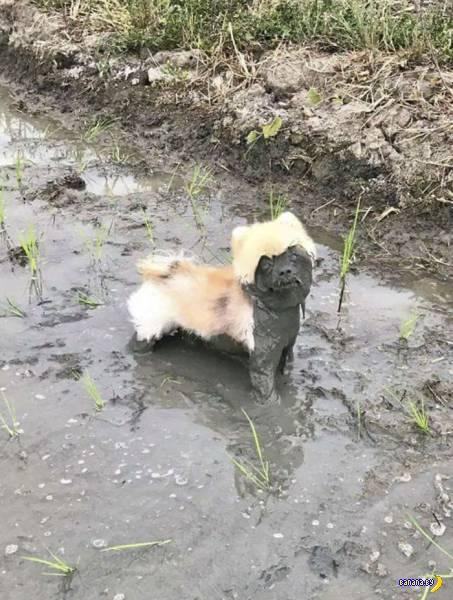 Почему собаки – свиньи?