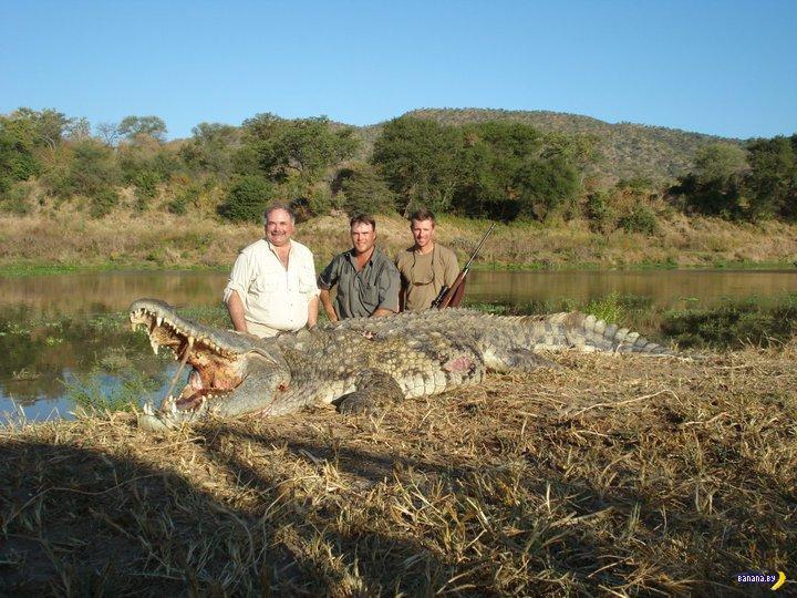 Проверку веры испортили крокодилы