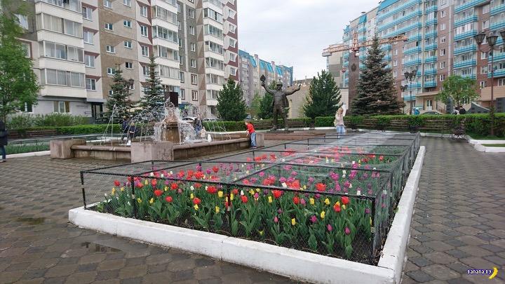 Тюльпаны и вандализм