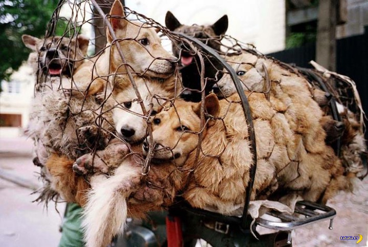 Собак не будут есть в Юйлине!