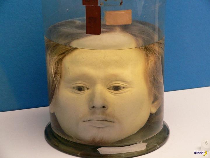 Самая знаменитая голова