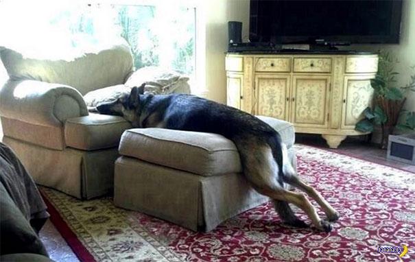 Домашние животные и домашние запреты