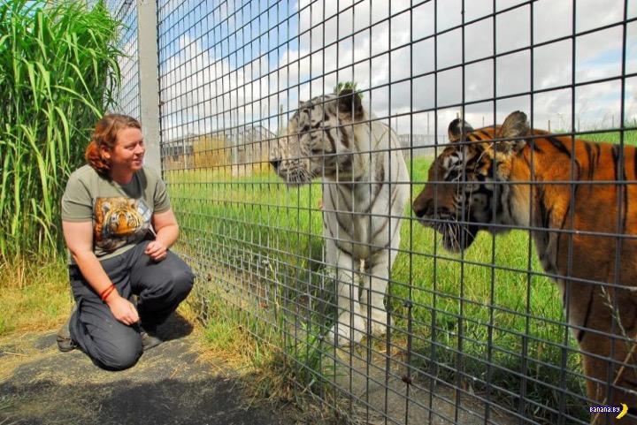 Как быть с тигром?