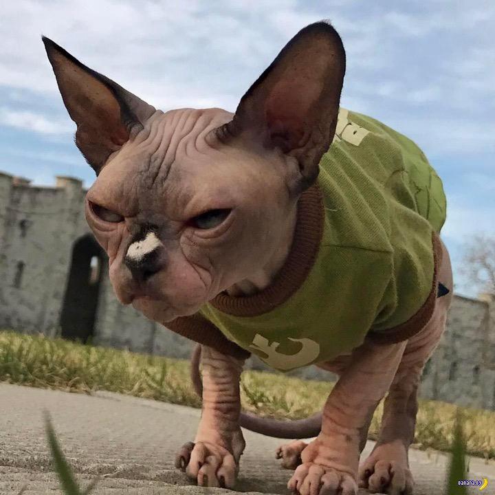 Котик не очень красивый