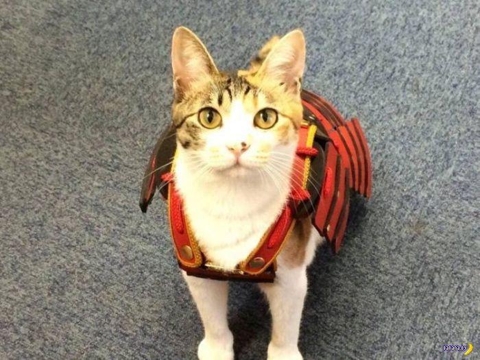 Самурайские доспехи для котов и собак