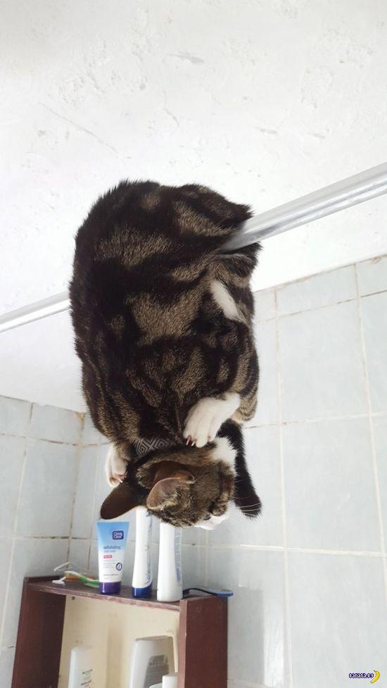 Странно себя ведут эти коты!