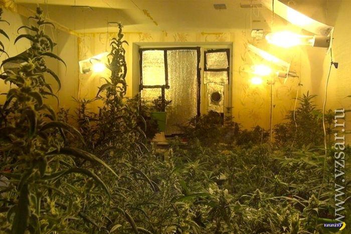 Самарские ботаники попались