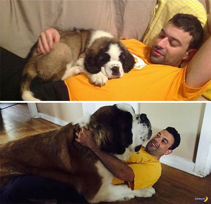 Собаки-вырастаки!