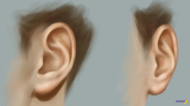Два уха в мангале и другая жесть